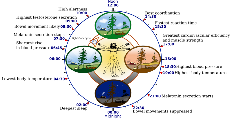 Human Biological Clock